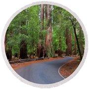 Beautiful Redwood Grove Round Beach Towel