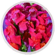 Beautiful Snapdragon Flowers Round Beach Towel