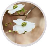 Beautiful White Flowering Dogwood Blossoms Round Beach Towel by Stephanie Frey