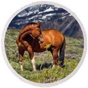 Beautiful Wild Mustang Horse Round Beach Towel