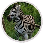 Beautiful Zebra Round Beach Towel