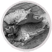 Beauty In Decay - Tree Fungus Bw Round Beach Towel