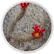 Round Beach Towel featuring the photograph Cholla's In The Desert by Elaine Malott