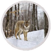 Beauty Of The Woods Round Beach Towel