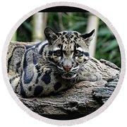 Clouded Leopard Beauty Round Beach Towel