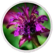 Round Beach Towel featuring the photograph Bee Balm Beauty by Chrystal Mimbs