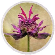 Bee Balm With A Vintage Touch Round Beach Towel