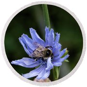 Round Beach Towel featuring the photograph Bee Flower by Nikki McInnes