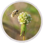 Bee Fly On A Wildflower Round Beach Towel by Christopher L Thomley