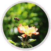 Bee Flying From Peach Petal Rose Round Beach Towel