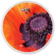 Bee Is Visiting A Poppy Round Beach Towel