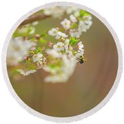 Bee On A Cherry Blossom Round Beach Towel