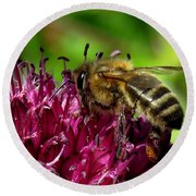 Bee On A Dark Pink Flower Round Beach Towel