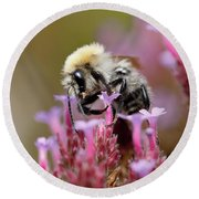 Round Beach Towel featuring the photograph Bee On A Verbena Bonariensis by Nick Biemans