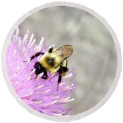 Round Beach Towel featuring the photograph Bee On Pink Bull Thistle by Meta Gatschenberger
