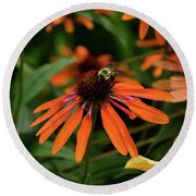 Bee Pollinating On A Cone Flower Round Beach Towel