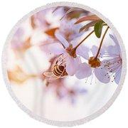 Bee Pollinates Spring Cherry Round Beach Towel