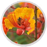 Bee Pollinating Bird Of Paradise Round Beach Towel