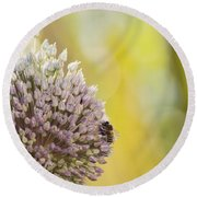Bees On Garlic Blossom Round Beach Towel