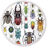 Beetle Collection Round Beach Towel by Kelly Jade King