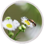 Beetle Daisy Round Beach Towel