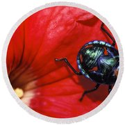 Beetle On A Hibiscus Flower. Round Beach Towel
