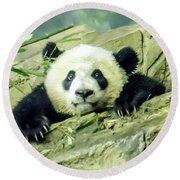 Bei Bei Panda At One Year Old Round Beach Towel