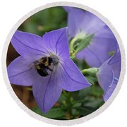 Bellflower And Bee  Round Beach Towel