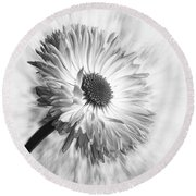 Bellis In Mono  #flower #flowers Round Beach Towel