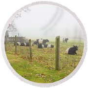 Belted Galloway Cows Farm Rockport Maine Photograph Round Beach Towel by Keith Webber Jr