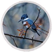 Belted Kingfisher Perch Round Beach Towel