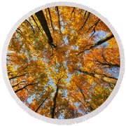 Beneath The Canopy Round Beach Towel