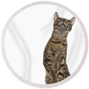Bengal Cat With Butterfly Round Beach Towel