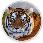 Bengal Tiger Portrait Round Beach Towel