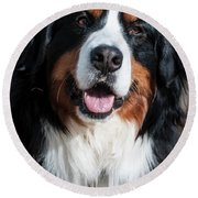 Bernese Mountain Dog Portrait  Round Beach Towel by Gary Whitton