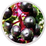 Wild Purple Pokeweed Berries  Round Beach Towel