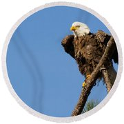Round Beach Towel featuring the photograph Berry Eagle by Geraldine DeBoer