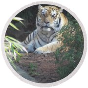 Round Beach Towel featuring the photograph Beyond The Branches by Laddie Halupa