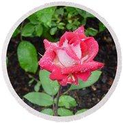 Bi-colored Rose In Rain Round Beach Towel