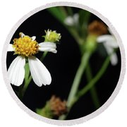 Round Beach Towel featuring the photograph Bidens Alba by Richard Rizzo