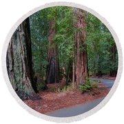 Big Basin Redwoods Round Beach Towel
