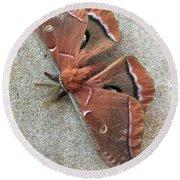 Big Beautiful Silk Moth Round Beach Towel