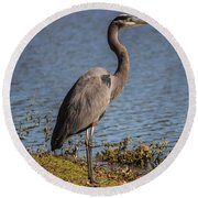 Big Bird Round Beach Towel