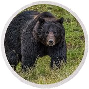 Big Black Grizzly Boar Round Beach Towel by Yeates Photography
