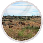 Round Beach Towel featuring the photograph Big Bucks In Velvet by Jennifer Muller