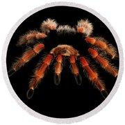 Big Hairy Tarantula Theraphosidae Isolated On Black Background Round Beach Towel