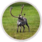 Big Horn Round Beach Towel by Anthony Jones