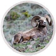 Round Beach Towel featuring the photograph Big Horn Sheep #2 by Scott Read