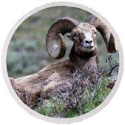 Big Horn Sheep #3 Round Beach Towel