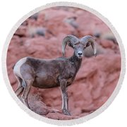 Big Horn Sheep Valley Of Fire Round Beach Towel